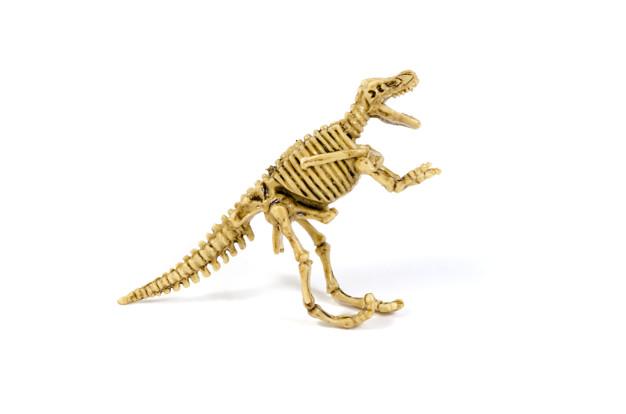 بقایایی جانداران زنده در موزه آنتالیا
