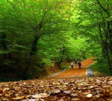 جنگل بلگراد استانبول